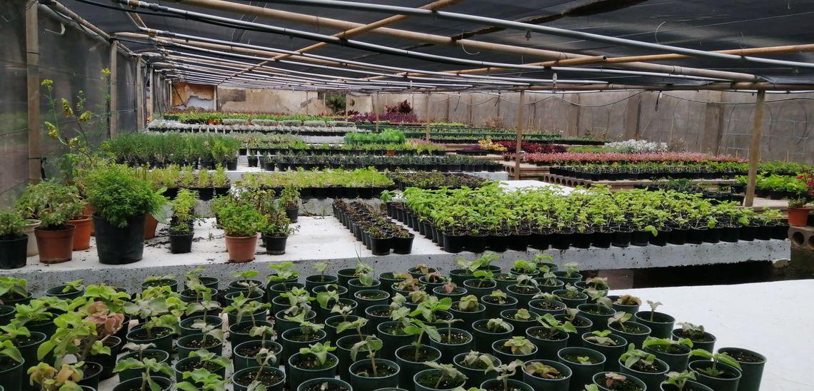Las plantas de temporada alcanzan su ciclo de floración en Santa Cruz y deberán ser trasplantadas en la ciudad